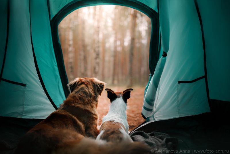 собака, природа, палатка, путешествие  Отдыхphoto preview
