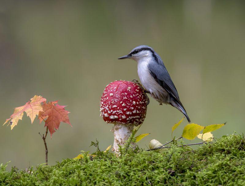 природа,лес,грибы,осень, Осень в лесу.photo preview