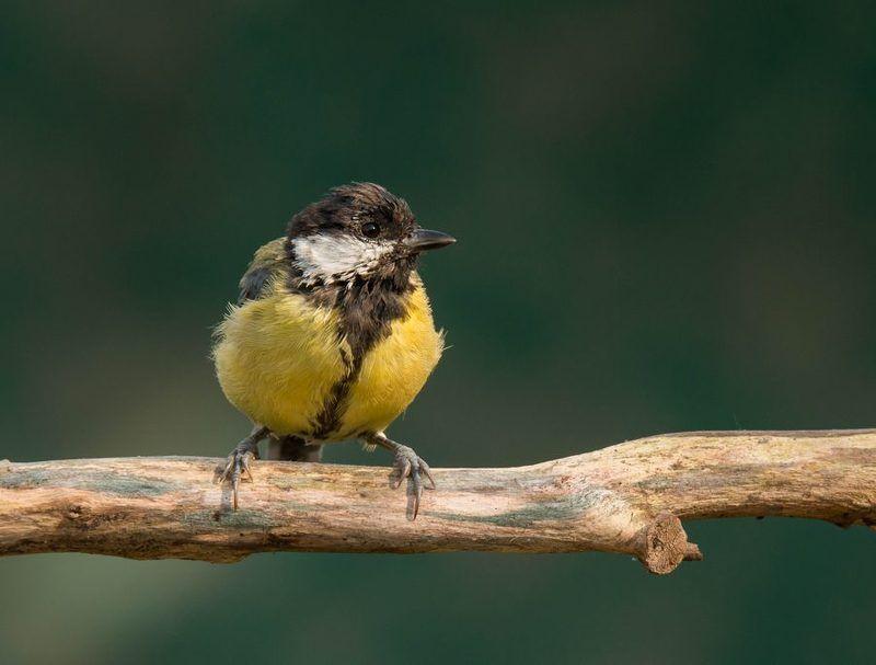птицы, синица, Обсохнуть бы надо!photo preview