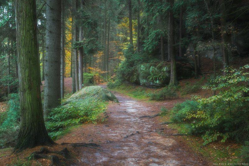 Германия, Саксония, природа, лес, Germany, nature, forest Сказочный лес Саксонииphoto preview