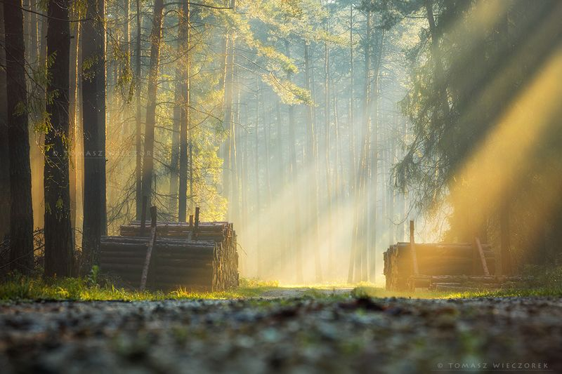 morning, sunrise, sunset, forest, poland, light, fog, misty, glow, wood, trees, dew, autumn Morning in the forestphoto preview