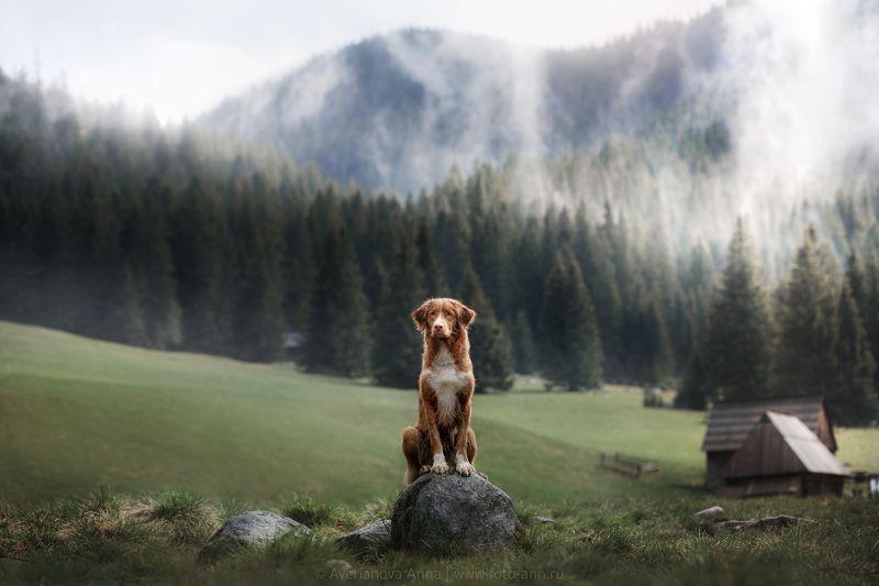 собака, горы, природа в долине photo preview
