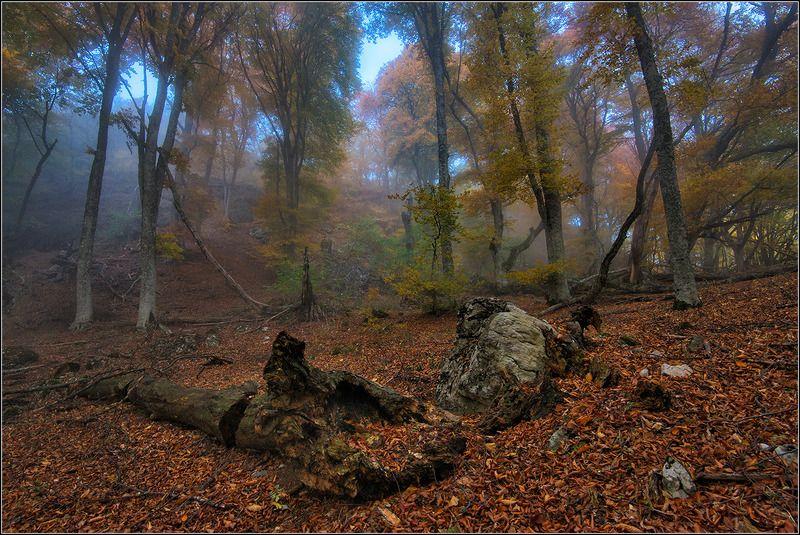 крым, осень, демерджи В горном лесуphoto preview