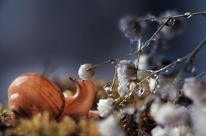 макро, природа, улитка, юпитер, цвет, цветы, вода Выпила капелькуphoto preview