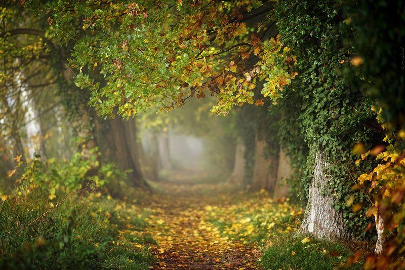 autumn magic path mist fall trees leafs grass foggy poland dranikowski jesien alley Magic Autumnphoto preview
