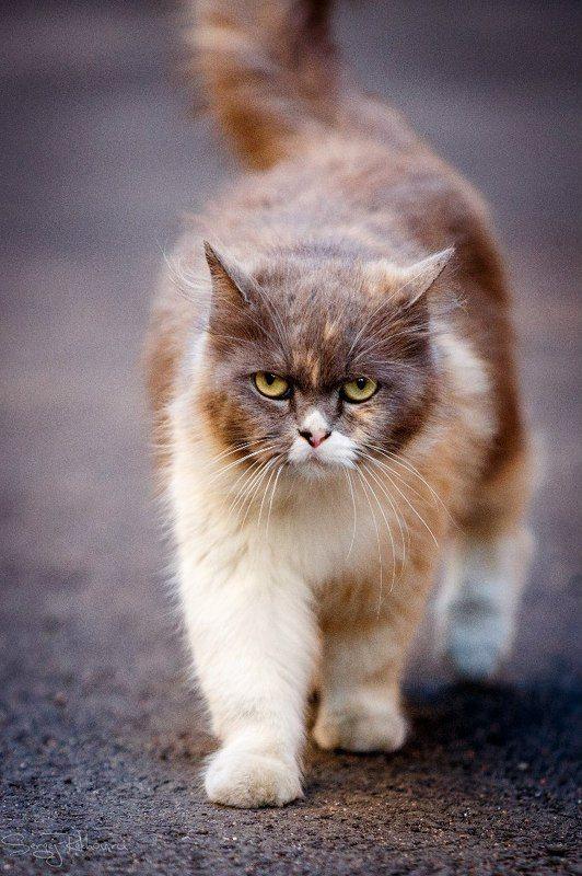 кот, животное, мяу, наглость, рехов, сергейрехов - Кто сказал \