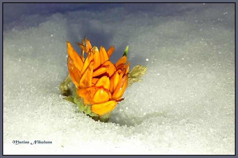 Последний цветок осениphoto preview