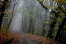 В тумане утреннем.....