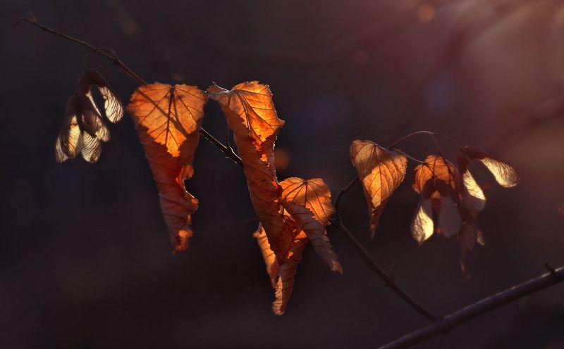 осень листья оранжевый орск оренбург Последнее Пламя Осени...photo preview