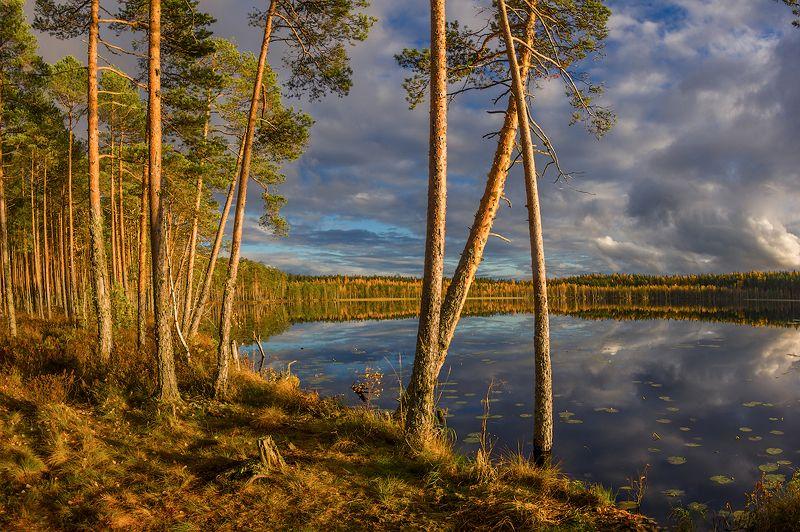 осень озеро солнце болото сосны вода гладь про  лесное озеро и солнечный вечерphoto preview