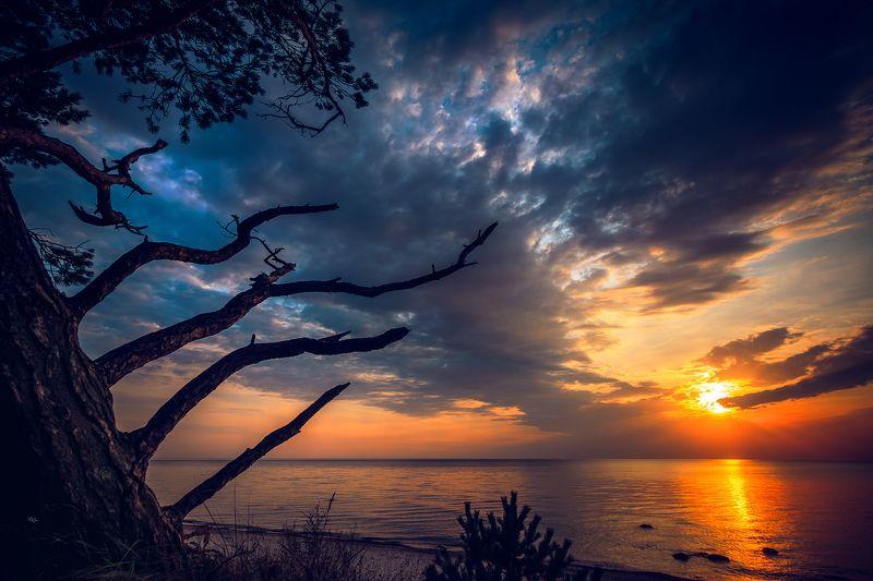 sunset, baltic sea, landscape, tree, colors Follow the sunphoto preview