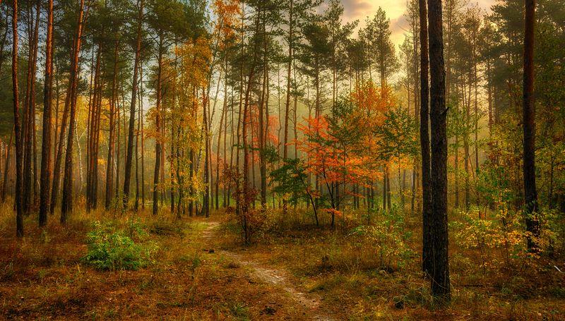 landscape, пейзаж,  лес,  деревья,  природа, тропинка, вечер, осень, осенние краски, осенние листья прогулка в осеньphoto preview