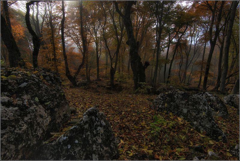 крым, осень, горы, лес, туман *  *  *photo preview