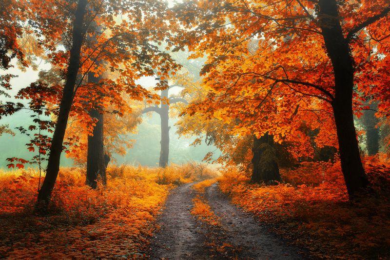 autumn magic path mist fall trees leafs grass foggy poland dranikowski jesien alley park Oсенние цветаphoto preview
