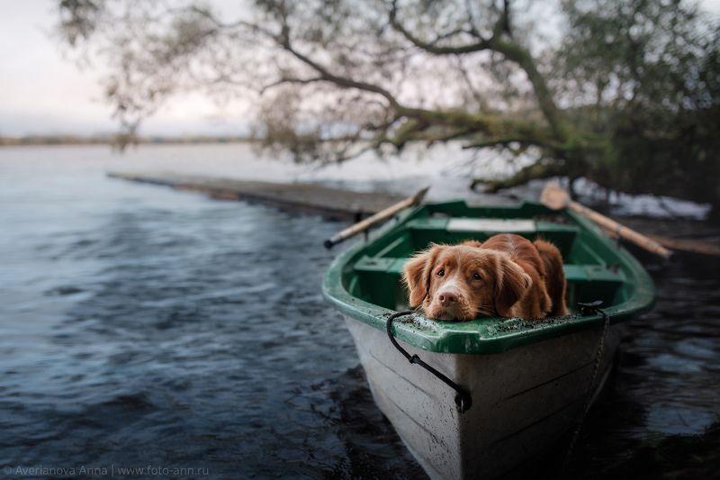 собака, грусть, природа, лодка photo preview