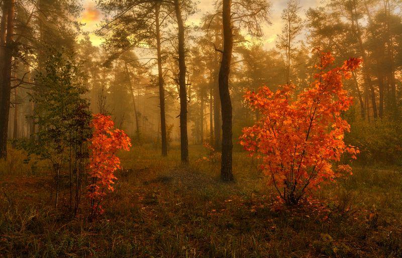landscape, пейзаж,  лес,  деревья,  природа, осенние листья,  осень,  сосны,  прогулка, осенние краски, вечер, туман вечер в лесуphoto preview