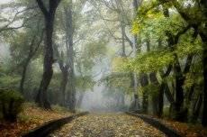 В парке туманном.....
