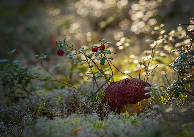 грибы лес мох корзина мухомор про грибочки :-) :-) :-)photo preview