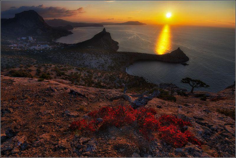 крым, осень, утро, новый свет Радуясь солнцуphoto preview