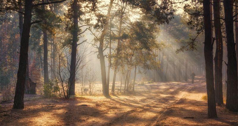 landscape, пейзаж, утро, лес, сосны, деревья, солнечный свет, солнечные лучи, солнце, природа, дорога, человек прогулка в лесуphoto preview