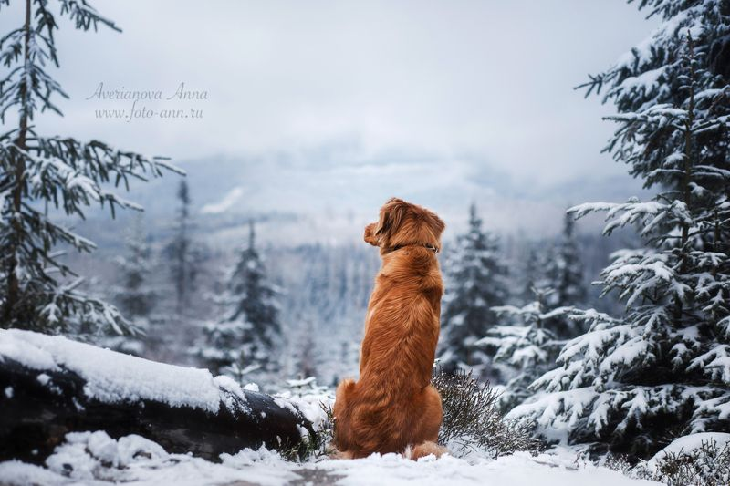 собака, зима, природа, горы Первый день зимы)photo preview