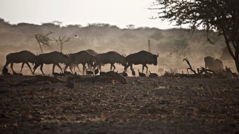 африканское утроphoto preview