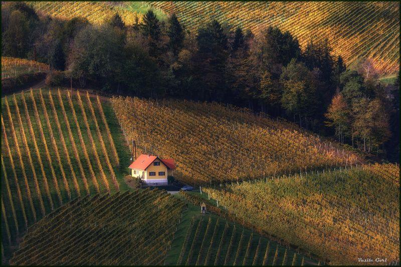 осень,свет,штирия,домик,австрия,виноградники,gamlitz, sernau,landscape Геометрия.photo preview