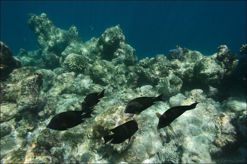 На домашнем рифе - 2photo preview