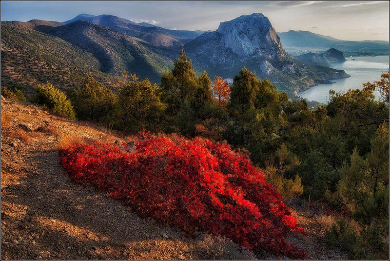 крым, осень, утро, новый свет *  *  *photo preview