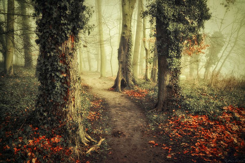 старая сказка old alley park path autumn fall tree trees magic mist foggy dranikowski jesien старая сказкаphoto preview