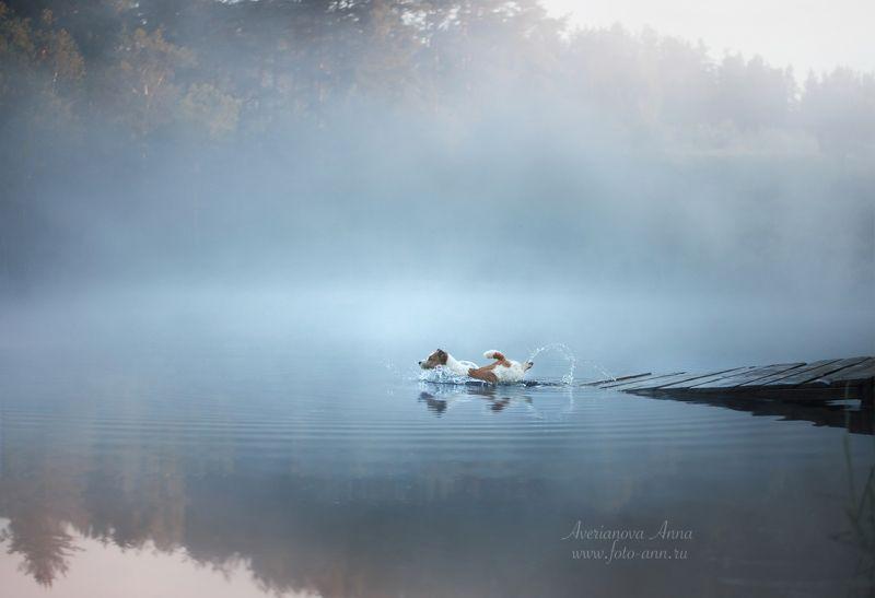 собака, природа, туман Летоphoto preview