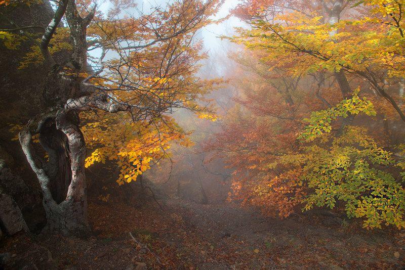 Туманный лес Демерджиphoto preview