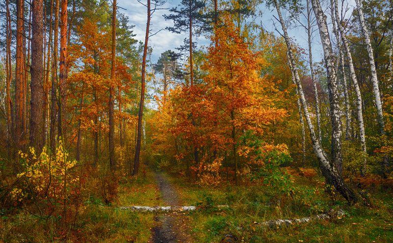 landscape, пейзаж,  лес,  деревья,  природа, осенние листья,  осень, осенние краски, тропинка, прогулка прогулка в осеньphoto preview