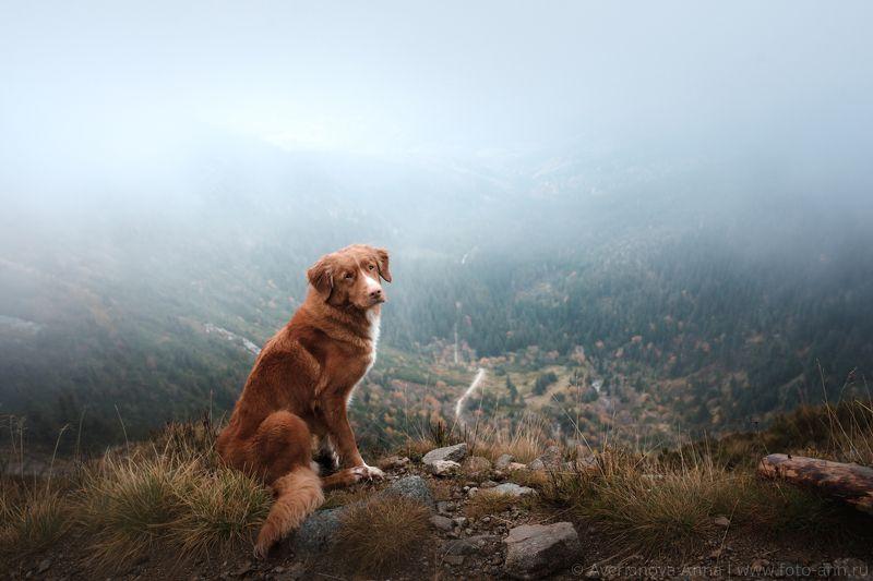 собака, природа, туман, горы В Туманеphoto preview