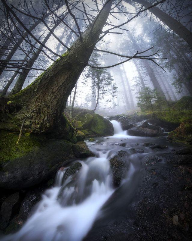 Бистришка река в мъглата на есента photo preview