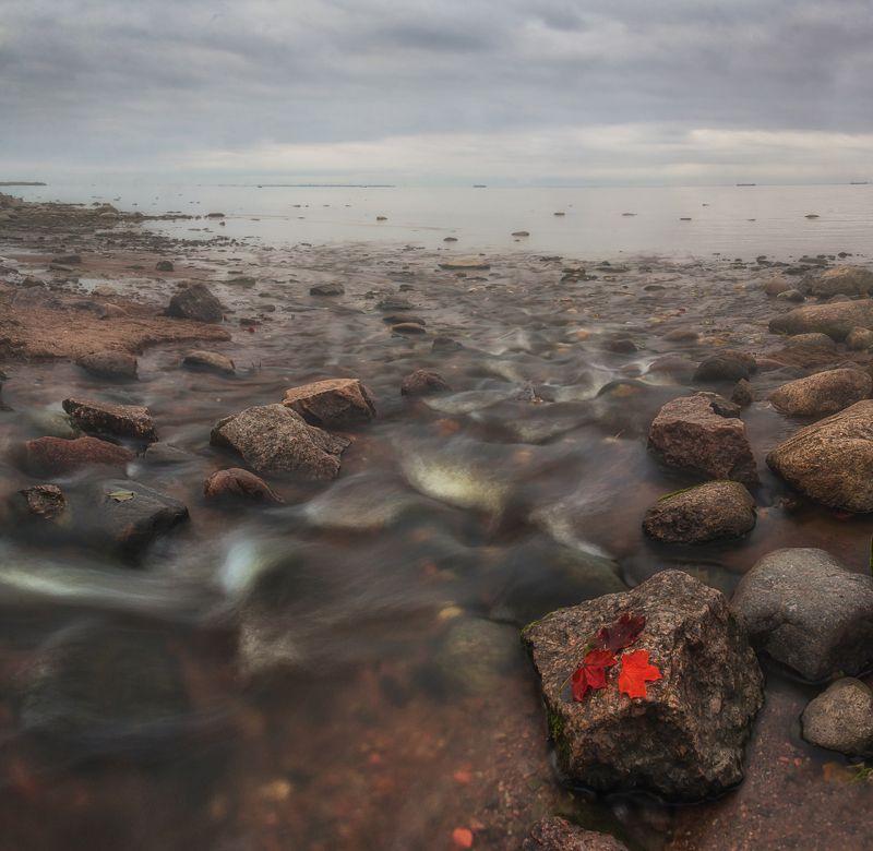осень, финский залив, выдержка, природа, пейзаж, ленинградская область Природа готовиться к зимеphoto preview