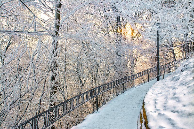 landscape, пейзаж, природа, зима, снег, изморозь, деревья, ветки, дорожка зимние картинкиphoto preview