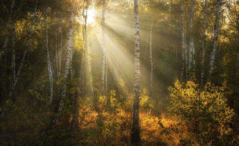 landscape, пейзаж, утро, лес,  деревья, солнечный свет, солнечные лучи, солнце, природа, утроphoto preview