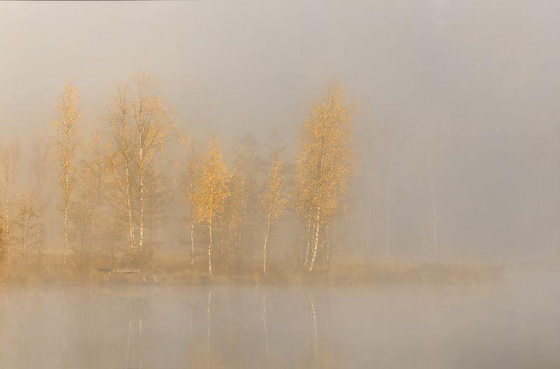 питер, рассвет, туман, утро, осень, болото, озеро ... тишинаphoto preview