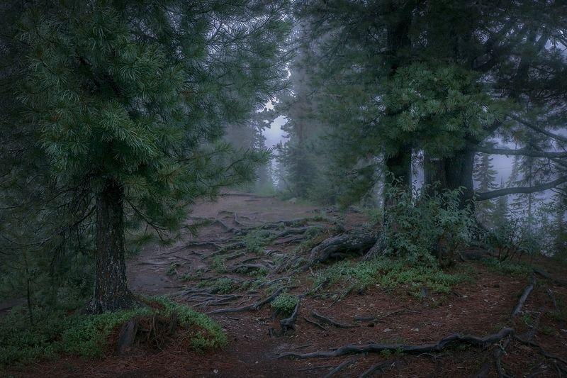 Туманы Светлого озераphoto preview