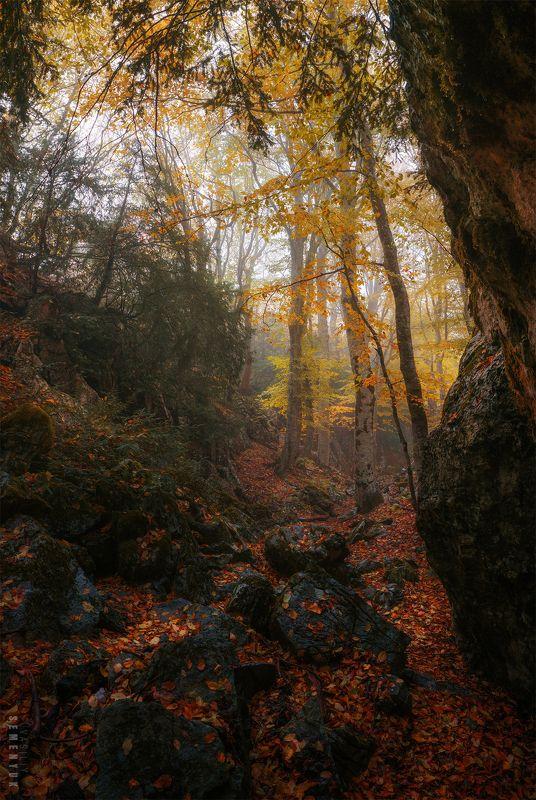 крым, чатыр-даг, тисовое ущелье, осень, лес, камни, туман, панорама. Осень в Тисовом ущелье.photo preview