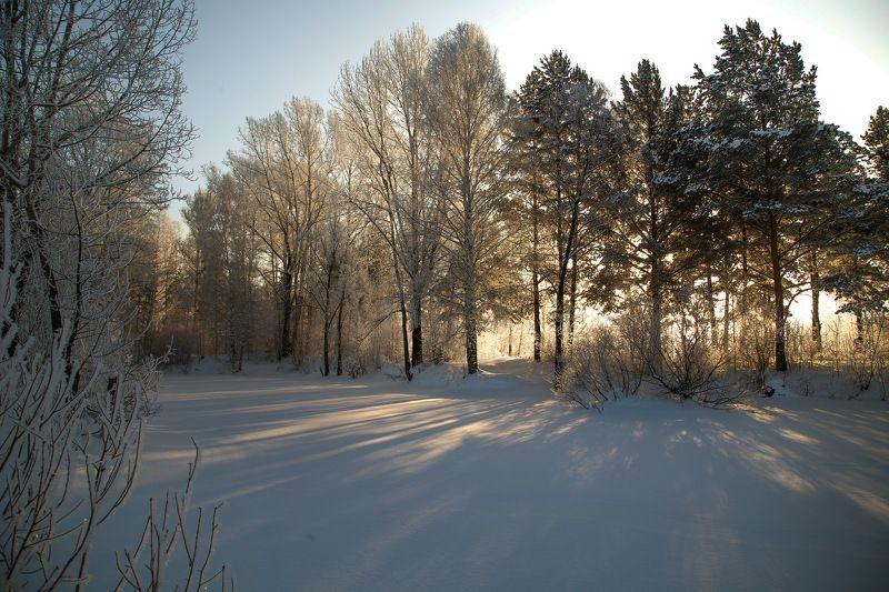 сибирь, зима, снег, кузбасс, природа, пейзаж, лес, Предновогоднее настроение Сибирской зимы!photo preview