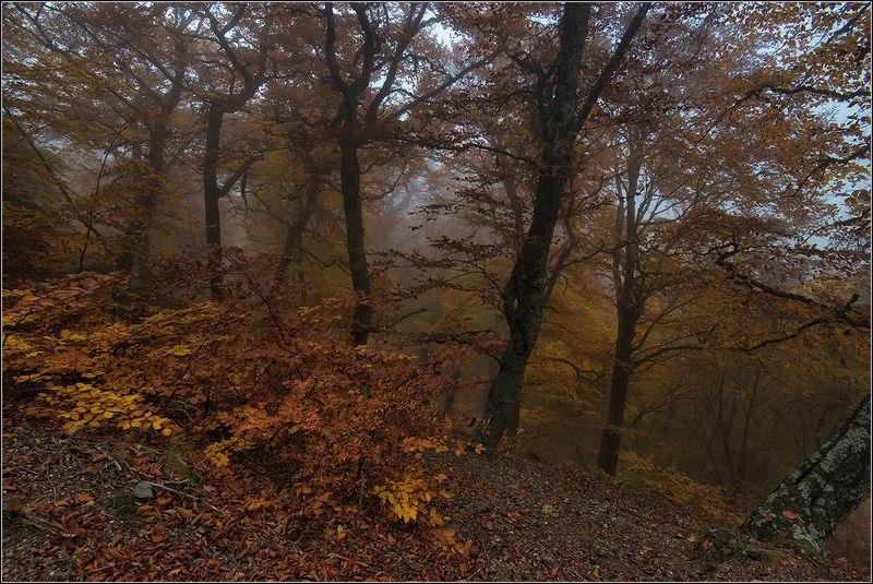 крым, октябрь, буковый лес, туман *  *  *photo preview