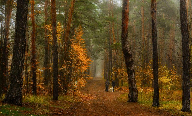 landscape, пейзаж,  лес,  деревья,  природа, осенние листья, осень, осенние краски, люди, собака, проселок, дорога, туман прогулка в лесуphoto preview
