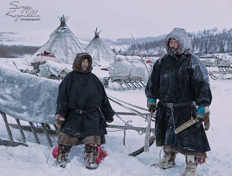 полярный урал, ямал, олени, оленеводы, ненцы Гость из соседнего стойбищаphoto preview