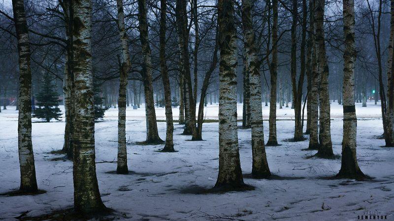 зима, берёзы, парк, минимализм, парк. Штрихкод зимы.photo preview