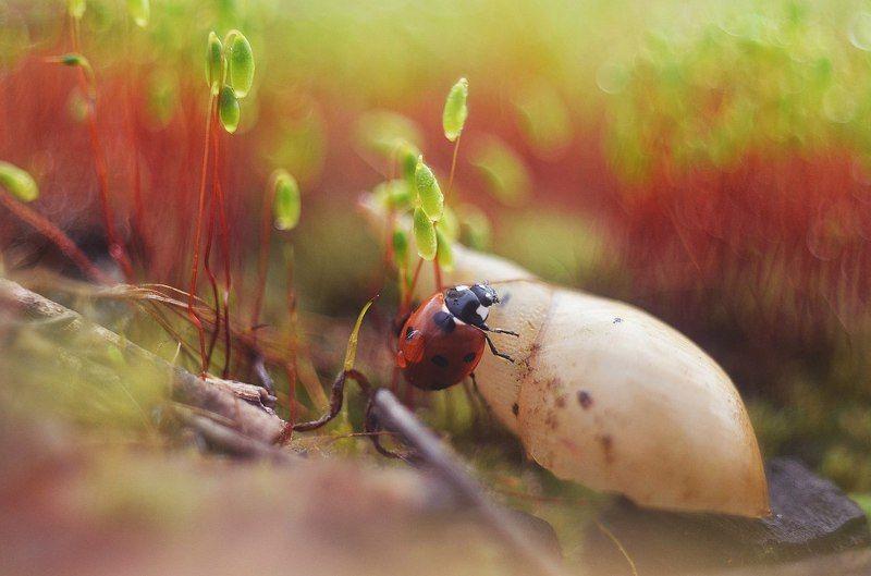 макро, жук, божья коровка, никон, весна, мох, лес, красиво В поисках приключенийphoto preview