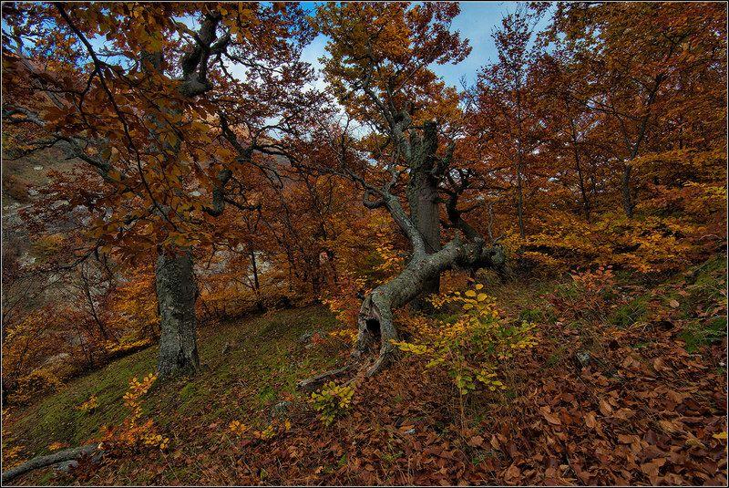 крым, октябрь, демерджи, лес *  *  *photo preview
