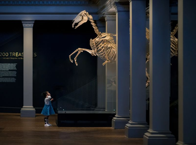 Night at the Museum:summon of the horsephoto preview