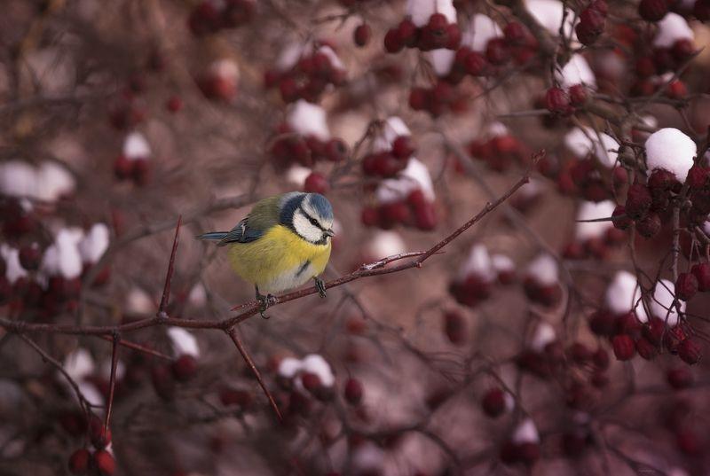 природа, лес, животные, птицы Краски уходящей осениphoto preview